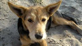 Le chien sur la plage Course autour du monde Images stock
