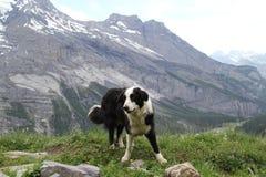 Le chien sur le dessus de la montagne Photographie stock