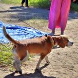 Le chien sur le lac Images libres de droits