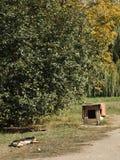 Le chien terrier d'obturation jeûnent en sommeil Photos libres de droits