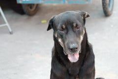 Le chien thaïlandais noir se reposant sur le rez-de-chaussée au marché avec une langue et a brouillé une roue de véhicule image stock
