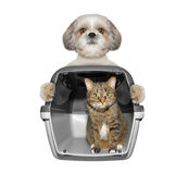 Le chien tient son chat d'ami dans le récipient Photo stock