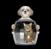 Le chien tient son chat d'ami dans le récipient Images libres de droits