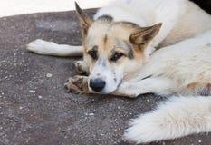 Le chien triste se trouve sur la rue Images stock