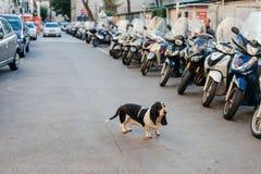 Le chien triste seul sur la rue de ville a perdu entre les voitures photographie stock libre de droits