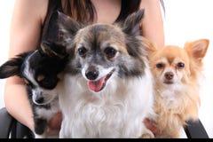 le chien trois heureux se reposent Image libre de droits