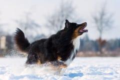 Le chien veut sauter dans la neige photos stock