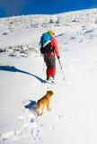 Le chien voyage dans les montagnes en hiver Photographie stock libre de droits