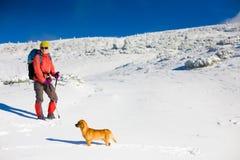 Le chien voyage dans les montagnes en hiver Photos libres de droits