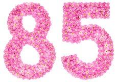 Le chiffre arabe 85, quatre-vingt-cinq, du myosotis rose fleurit, Photo stock