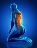 le chiffre 3D médical masculin avec l'épine a accentué dans le positi d'agenouillement Photo stock