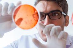 Le chimiste travaillant dans le laboratoire avec les produits chimiques dangereux photos libres de droits