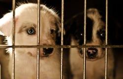 Le chiot attend pour être adopté Photo libre de droits