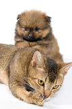 Le chiot avec un chat Photo libre de droits