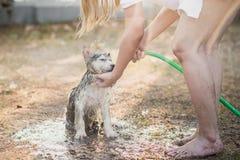 Le chiot de chien de traîneau sibérien secoue l'eau outre de son manteau photographie stock