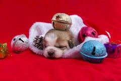 Le chiot de Noël Image libre de droits