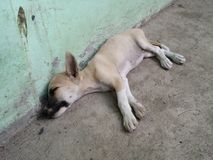 Le chiot de sommeil Image libre de droits