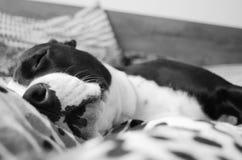 Le chiot de sommeil images stock