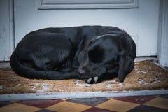 Le chiot de sommeil photos libres de droits