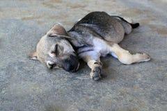 Le chiot dort sur un trottoir sur une rue Photos libres de droits