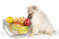 Le chiot et le fruit Photo libre de droits