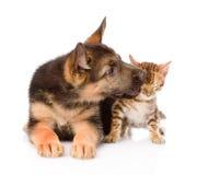 Le chiot mignon embrasse le chaton d'ittle D'isolement sur le fond blanc Photographie stock libre de droits