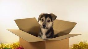 Le chiot mignon se repose dans la boîte de expédition avec des décorations de Noël et de nouvelle année Image stock