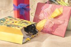 Le chiot minuscule de Jack Russell Terrier est au beau milieu de beaucoup de cadeaux image libre de droits