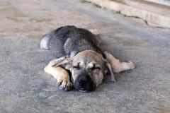 Le chiot somnolent se trouve sur un trottoir sur une rue Images stock