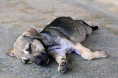 Le chiot somnolent se trouve sur un trottoir sur une rue Photographie stock