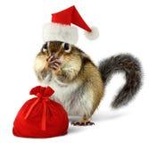 Le Chipmunk dans le chapeau rouge du père noël avec Santa mettent en sac Photos libres de droits