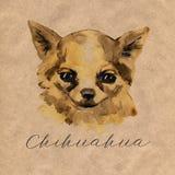 Le chiwawa est mini chien populaire Tête d'un terrier de jouet sur le fond d'aquarelle Collection animale d'aquarelle : Chiens illustration de vecteur