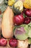 Le chou d'oignon de potiron et beaucoup l'autre automne a fraîchement sélectionné l'organe photo stock