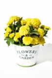 Le chrysanthème fleurit dans un pot décoratif sur un fond blanc Images stock