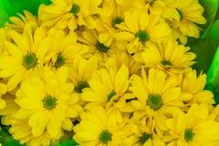 Le chrysanthème jaune lumineux fleurit le fond Photos libres de droits
