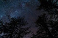 Le ciel étoilé vu de la région boisée noire de conifère Photos stock