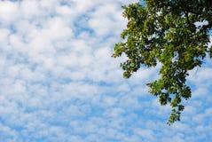 Le ciel avec des nuages d'altocumulus et une branche verte Photos libres de droits