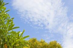 Le ciel avec yellow&green l'arbre Images libres de droits
