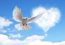 Le ciel bleu avec des coeurs forment les nuages et la colombe photo libre de droits