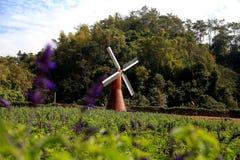 Le ciel bleu avec du coton de peacefull opacifie et jardin européen Photos libres de droits