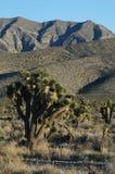 Le ciel bleu-clair pose l'horizon de désert Photographie stock