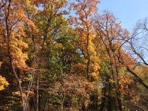 Le ciel bleu correspond aux feuilles chinées colorées photo stock