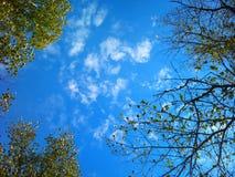 Le ciel bleu d'automne, nuages, jaunes sèchent des feuilles Photos stock