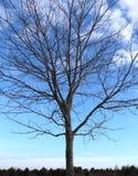 Le ciel bleu, les branches nues gravant à l'eau-forte à l'extérieur, des cimes d'arbre dans la distance, créent la beauté d'hiver photos libres de droits