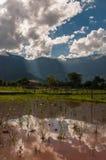 Le ciel bleu nuageux se reflètent en riz Paddy Field Photos stock
