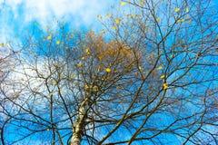 Le ciel d'automne dans les arbres Photographie stock libre de droits
