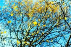 Le ciel d'automne dans les arbres Photo libre de droits