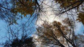 Le ciel de l'automne image libre de droits