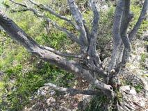 Le ciel de nature d'arbre laisse le soleil photos stock