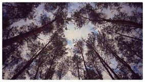 Le ciel est près Image libre de droits